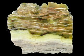 "Buy 4.2"" Chatoyant, Polished Pietersite Section - Arizona - #146434"