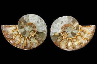 "Buy Bargain, 3.55"" Agate Replaced Ammonite Fossil (Pair) - Madagascar - #145840"