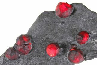 Garnet var. Almandine & Graphite - Fossils For Sale - #148173