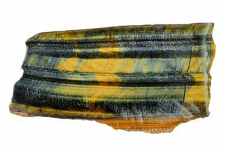 "4"" Polished Tiger's Eye Section - South Africa For Sale, #148247"