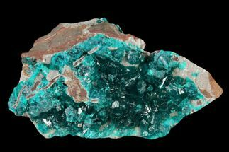 "2.55"" Gemmy Dioptase Crystal Cluster - N'tola Mine, Congo For Sale, #148463"