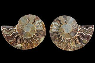 "3.9"" Agatized Ammonite Fossil (Pair) - Crystal Filled Chambers For Sale, #145817"