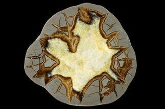 "5.6"" Polished Septarian Slab - Utah For Sale, #150005"