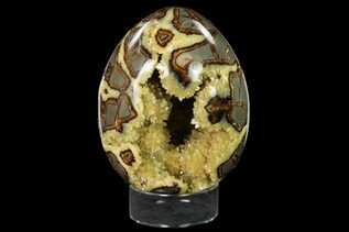Septarian For Sale