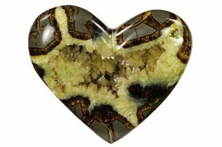 Septarian - Fossils For Sale - #149943