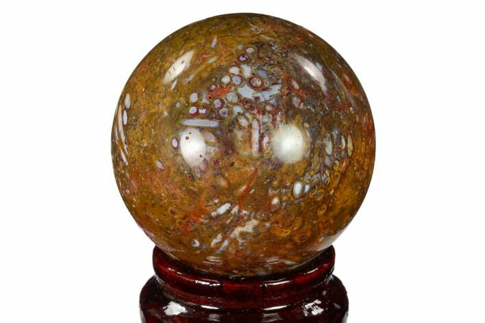 "2.05"" Colorful, Polished Petrified Palm Root Sphere - Indonesia"