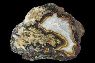 Quartz var. Agate - Fossils For Sale - #150507