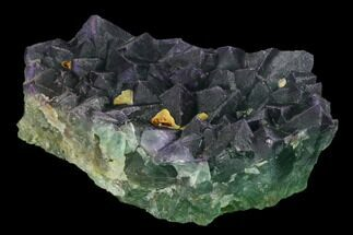 "3.8"" Purple-Green Octahedral Fluorite Crystal Cluster - Fluorescent! For Sale, #149669"