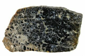 "4"" Polished, Black Petrified Palm Root Slab - Indonesia For Sale, #151931"