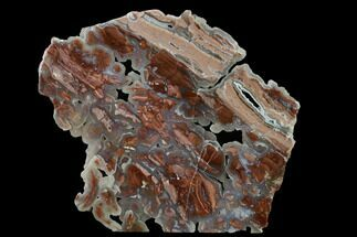 "Buy 10.1"" Polished Wyoming Youngite Agate/Jasper Slab - Fluorescent - #152155"