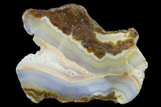 "Buy 4"" Polished Calandria Agate Section - Mexico - #152650"