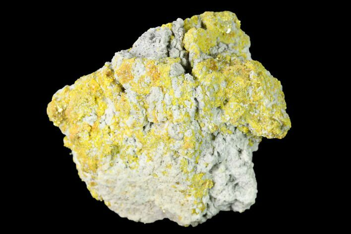 "1.31"" Yellow Orpiment - Crven Dol Mine, Macedonia"