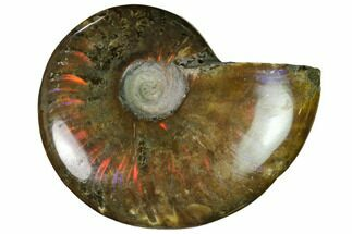 "Buy 2.2"" Red Flash Ammonite Fossil - Madagascar - #151690"