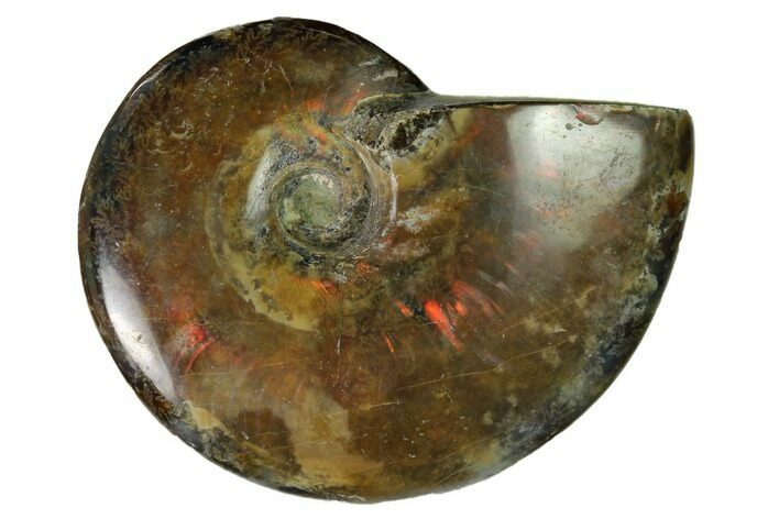 "1.95"" Red Flash Ammonite Fossil - Madagascar"