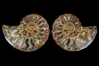 "2.6"" Agatized Ammonite Fossil (Pair) - Crystal Filled Chambers For Sale, #145976"