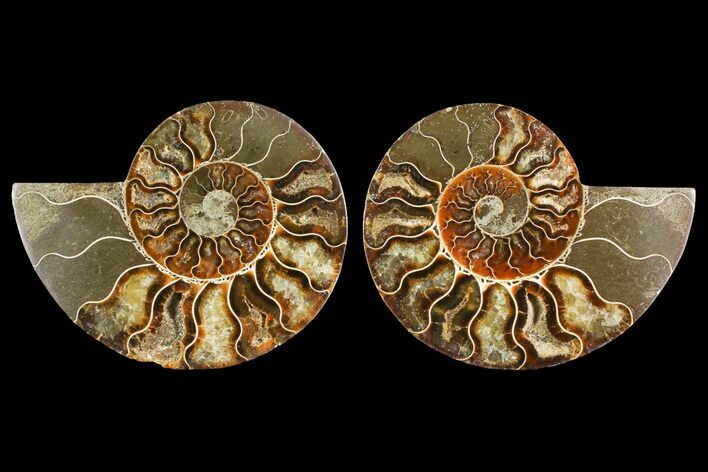 "4.7"" Agate Replaced Ammonite Fossil (Pair) - Madagascar"