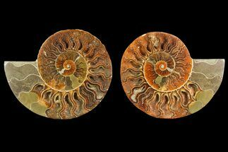 "Buy 4.4"" Agate Replaced Ammonite Fossil (Pair) - Madagascar - #150898"