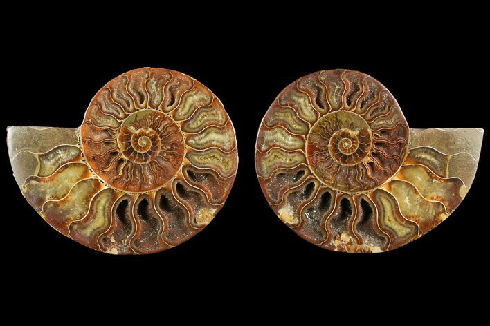 "4.8"" Agate Replaced Ammonite Fossil (Pair) - Madagascar"