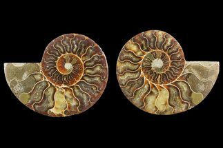 "4.1"" Agate Replaced Ammonite Fossil (Pair) - Madagascar For Sale, #150902"