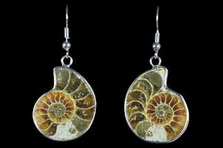 Buy Fossil Ammonite Earrings - 110 Million Years Old - #152005