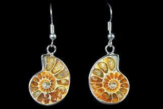 Fossil Ammonite Earrings - 110 Million Years Old For Sale, #152009