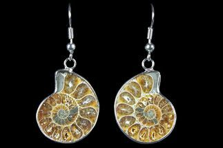Buy Fossil Ammonite Earrings - 110 Million Years Old - #152011