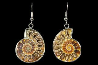 Buy Fossil Ammonite Earrings - 110 Million Years Old - #152017