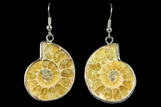 Fossil Ammonite Earrings - 110 Million Years Old For Sale, #152021