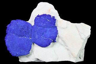 Buy Two Vibrant Blue Azurite Suns on Siltstone - Australia - #155545
