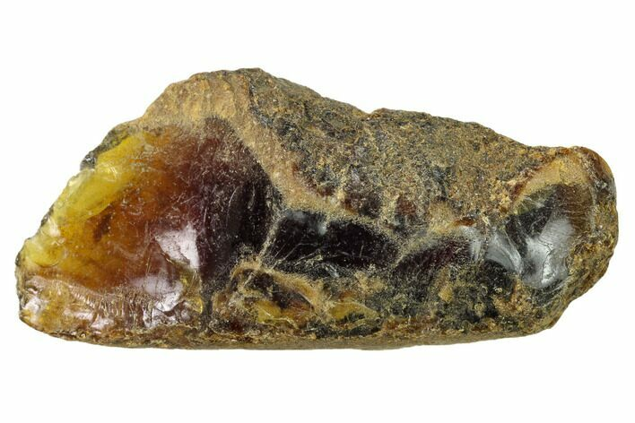 "2.85"" Rough Blue Indonesian Amber - West Java, Indonesia"
