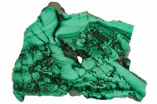 "3.6"" Polished Malachite Slab - Congo For Sale, #157256"