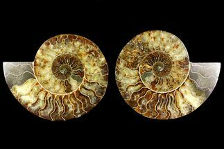 "6.15"" Agate Replaced Ammonite Fossil (Pair) - Madagascar For Sale, #158309"