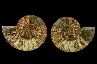 "Buy 5.5"" Agate Replaced Ammonite Fossil (Pair) - Madagascar - #158314"