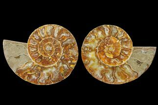 "Bargain, 3.7"" Cut & Polished Ammonite Fossil (Pair) - Madagascar For Sale, #148043"