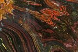 "7.3"" Polished Tiger Iron ""Stromatolite"" Slab - 3.02 Billion Years - #162004-1"