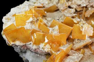 "2.9"" Windowpane Wulfenite Crystal Cluster - Mexico For Sale, #163160"