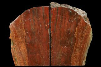 "Buy 8.8"" Tall, Arizona Petrified Wood Bookends - Red & Orange - #166081"