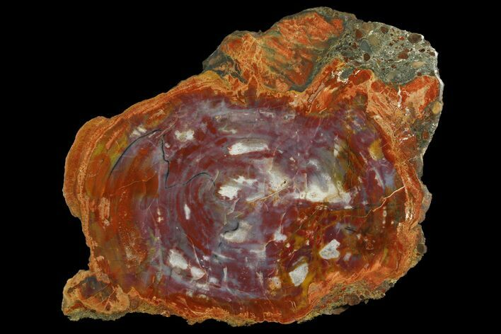 "17.7"" Colorful Petrified Wood (Araucarioxylon) Slab - Arizona"