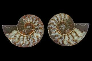 "Buy 4.3"" Agate Replaced Ammonite Fossil (Pair) - Madagascar - #166750"