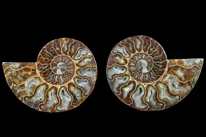 "4.5"" Agate Replaced Ammonite Fossil (Pair) - Madagascar"