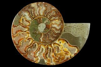 "Buy 4.9"" Cut & Polished Ammonite Fossil (Half) - Madagascar - #166807"