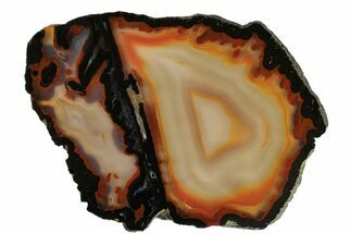 Chalcedony var. Agate - Fossils For Sale - #167514