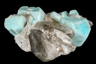 "3"" Amazonite Crystals On Smoky Quartz - Colorado For Sale, #168083"