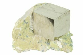 Pyrite - Fossils For Sale - #168498