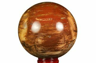 "3"" Colorful Petrified Wood Sphere - Madagascar For Sale, #169136"