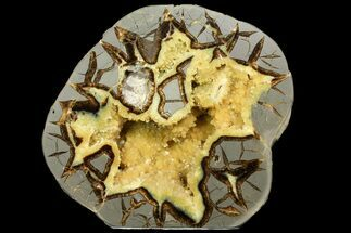 Septarian - Fossils For Sale - #170007