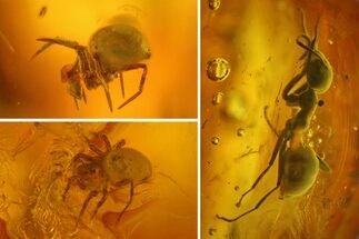 Fossil Ant (Formicidae) and Two Spiders (Araneae) In Baltic Amber For Sale, #170102
