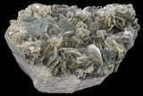 "5.45"" Aquamarine Crystals On Muscovite With Fluorite - Pakistan - #170749-3"