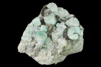 "Buy 3.4"" Amazonite Crystal Cluster with Smoky Quartz - Colorado - #168076"