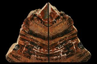 "8.05"" Tall, Arizona Petrified Wood Bookends - Red & Black For Sale, #172013"